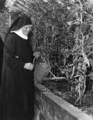 Sister Florina a Benedictine nun of Minster Abbey in Thanet Kent watering tomatoes in one of the Abbey greenhouses
