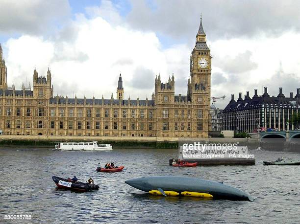 A 50ft inflatable whale barge with antiwhaling hoarding and marine mammal rescue boats pass the Houses of Parliament London The flotilla staged by...