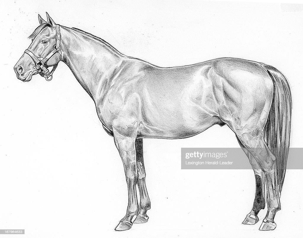 54p2 x 42p Camille Weber b&w illustration of race horse Citation.
