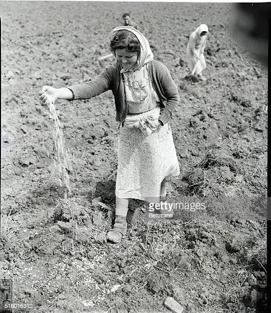 5/6/1949An Italian girl plants seed provided by the ERP on a farm near Rome One of the country's main problems is the lack of good arable land only...