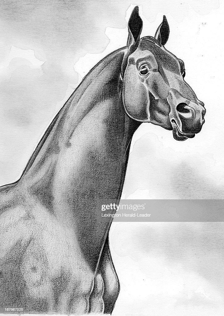 60p x 84p Camille Weber b&w illustration of race horse Man o' War.