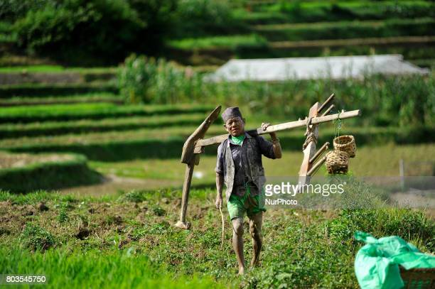 65yrs old RATNA BAHADUR NAGARKOTI arrives to plowing paddy field using ox for the rice plantation during the celebration of National Paddy Day...