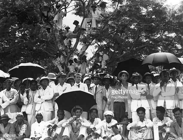 A crowd of spectators some sitting in a tree watching the Australian team playing a test match at Colombo