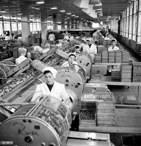 Some of the 4300 women employed by Cadbury working at the factory in Bournville Original Publication Picture Post 6979 The Best And The Worst Of...
