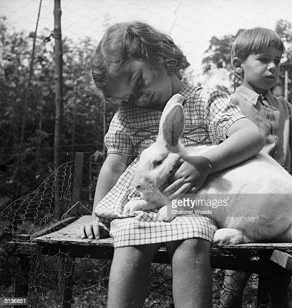 A little girl petting a large rabbit on top of a hutch