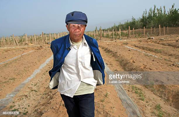 70year old farmer Qi Shenglian walks on grape and watermelon fields that have been claimed from the Tengeli desert on May 8 2007 in Ningxia Province...