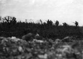 Men of the Wiltshire Regiment advancing to attack at Thiepval