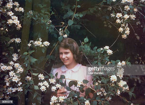 Princess Elizabeth amongst a syringa bush in the grounds of Windsor Castle Berkshire