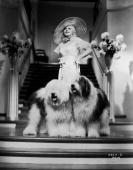 Flanked by a pair of old English sheepdogs Jean Harlow is Hollywood sex goddess Lola Burns in 'Bombshell' directed by Victor Fleming