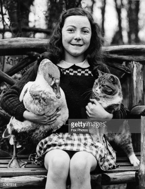 Fay Hollingsworth of Dumpton Broadstairs Kent holds her father's racing goose Herbert with the cat Jim Both animals get on well Herbert usually wins...