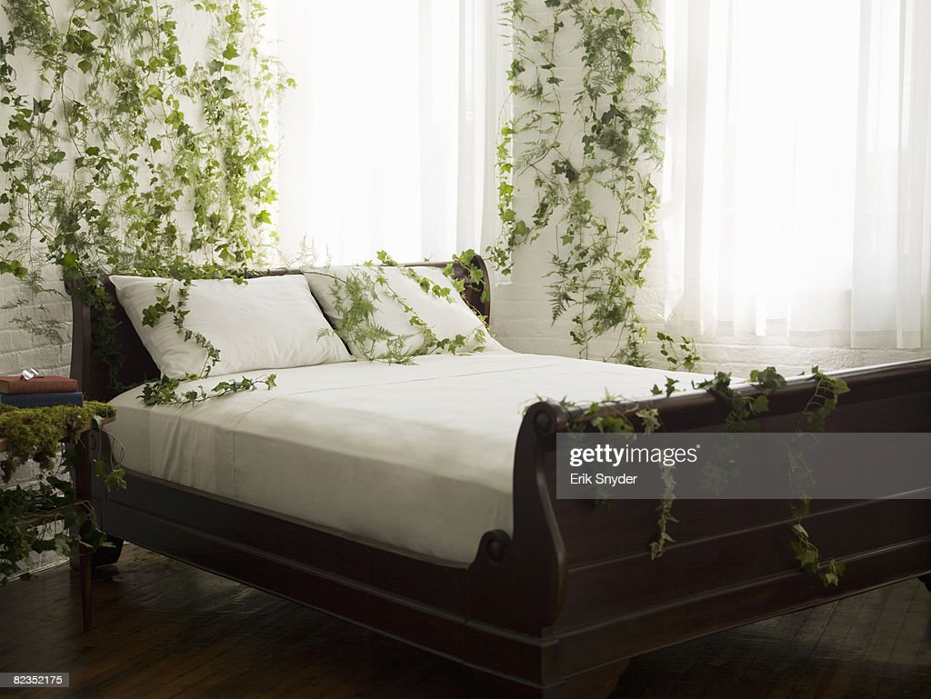 a bedroom with vines on the walls : Stock Photo