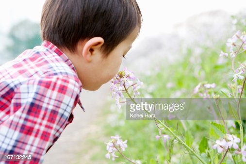 a boy playing in the flower field : Stock Photo