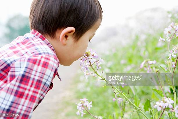 a boy playing in the flower field