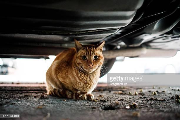 a cat under a car