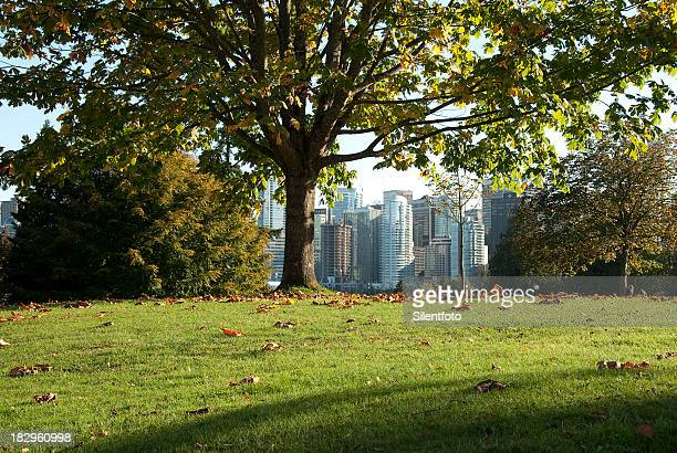 a city grows in Stanley Park, Vancouver.