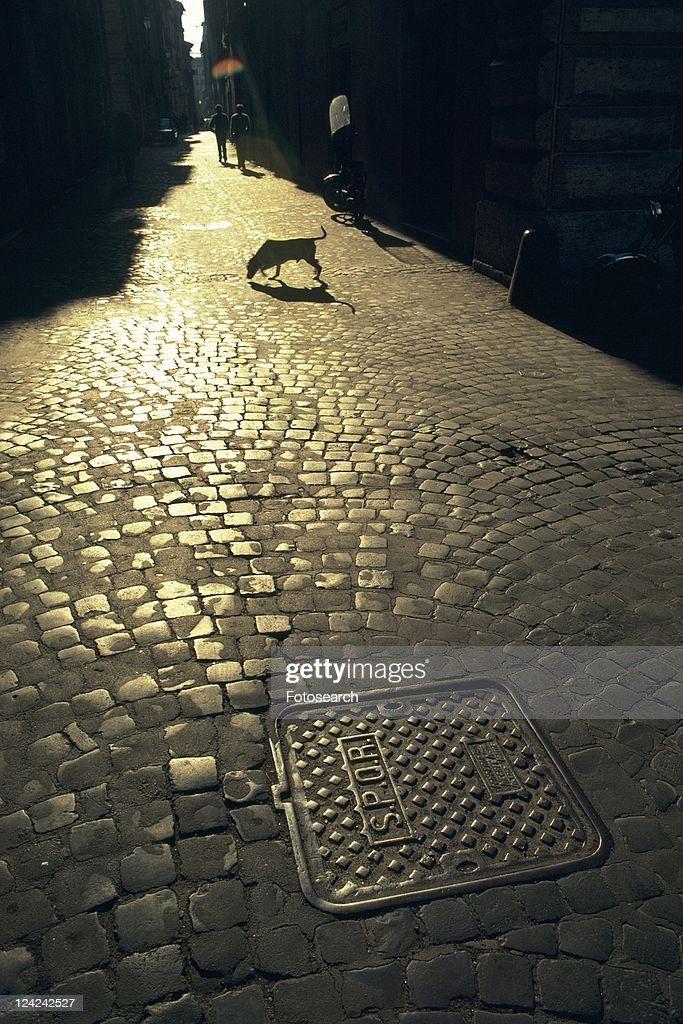 a Cobbled Road, With a Dog Walking on It, High Angle View, Lisbon, Portugal, Europe : Stock Photo