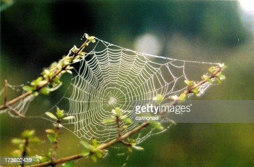 a cobweb with dew drops