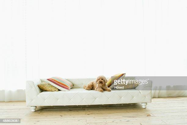 a dog lying down on the couch in the living room