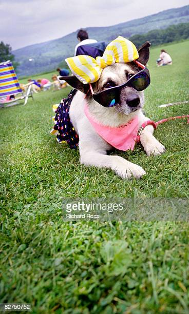 a dog with a costume and sunglasses