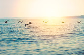 a flight of seagulls over Lake Michigan