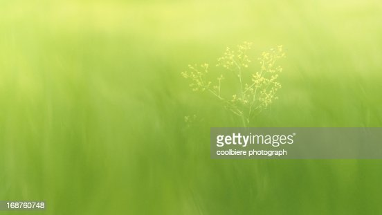 a flower with very soft green meadow background : Stock Photo