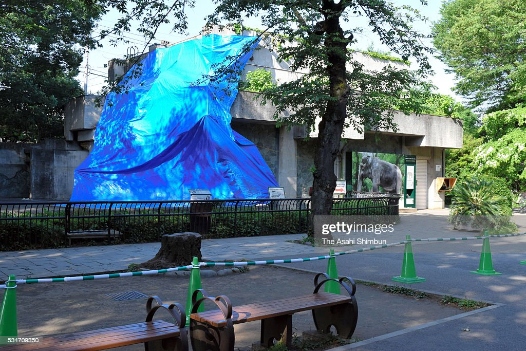 a general view a day after the death of Japan's oldest elephant Hanako at Inokashira Park Zoo on May 27, 2016 in Musashino, Tokyo, Japan.