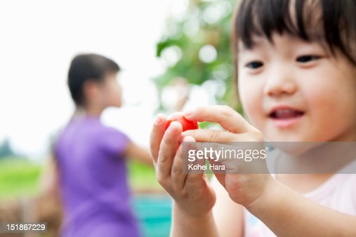 a girl harvesting a cherry tomato in the farm : Stock Photo