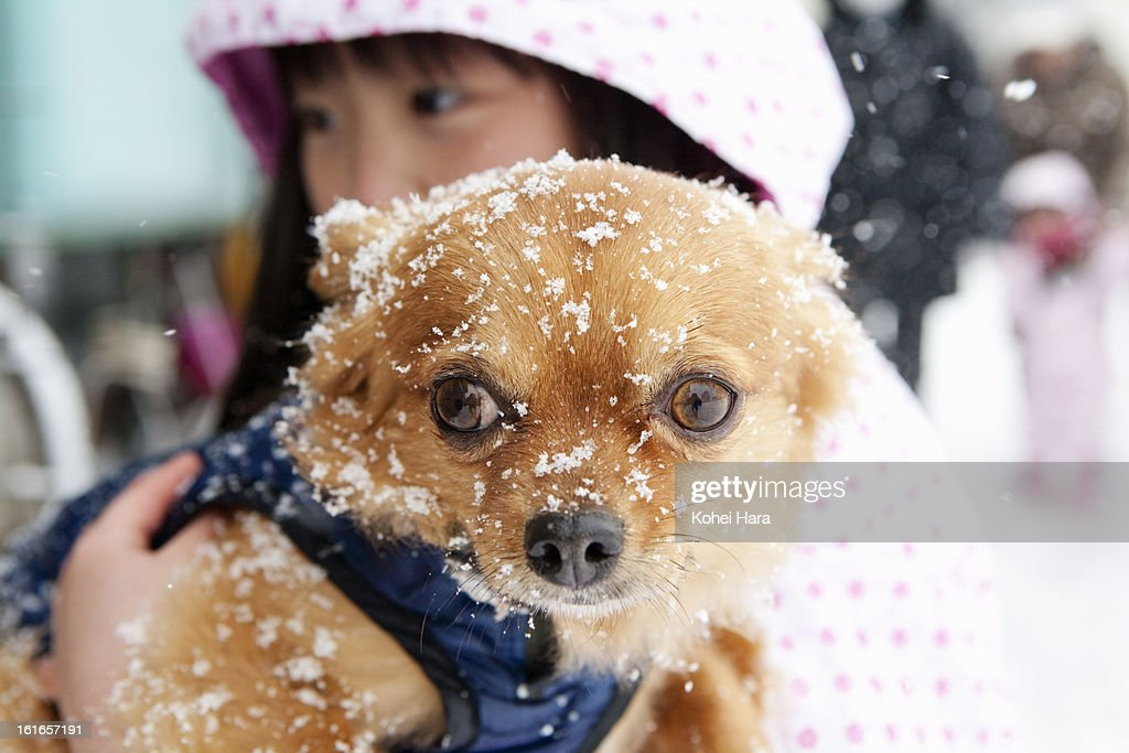 a girl holding a dog outside in winter : Stock Photo