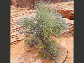 a green bush in the grand canyon