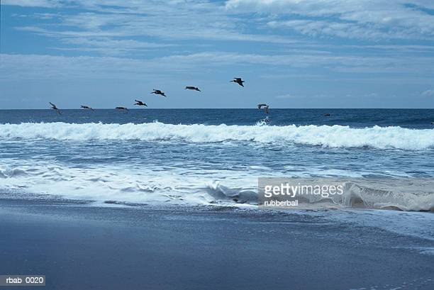 a group of pelicans are flying in formation over the ocean shore in costa rica