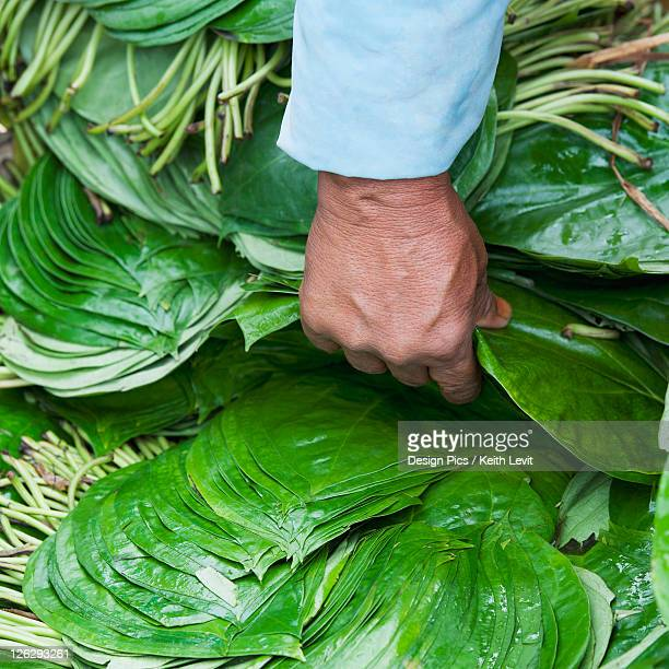 a hand picks up a pile of green leaves at a vegetable market