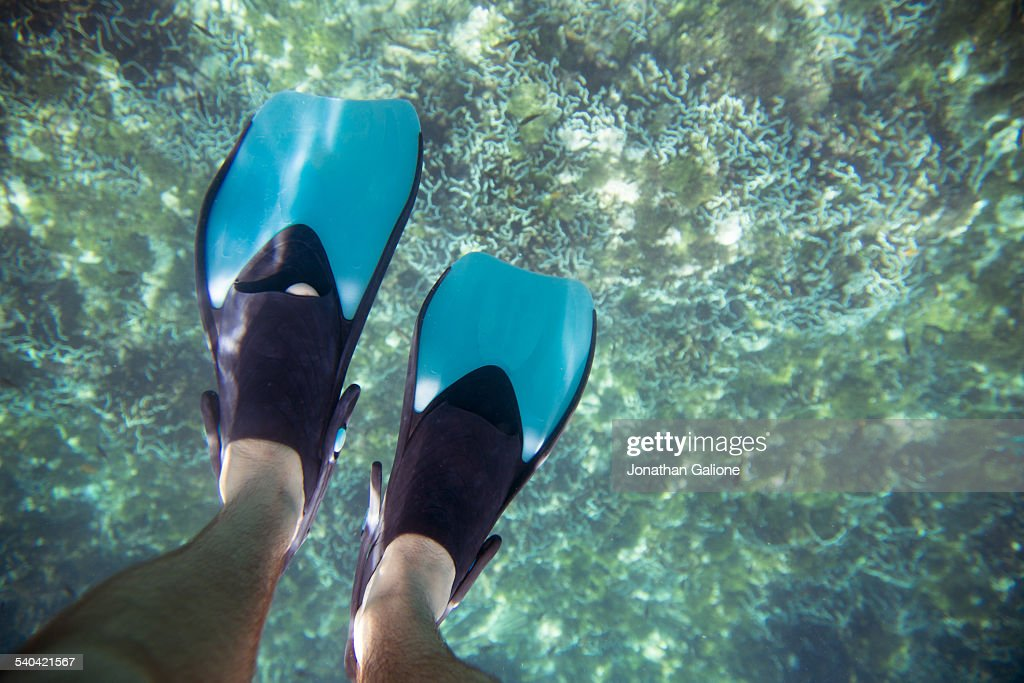 POV of a man wearing fins swimming in the ocean : Stock Photo