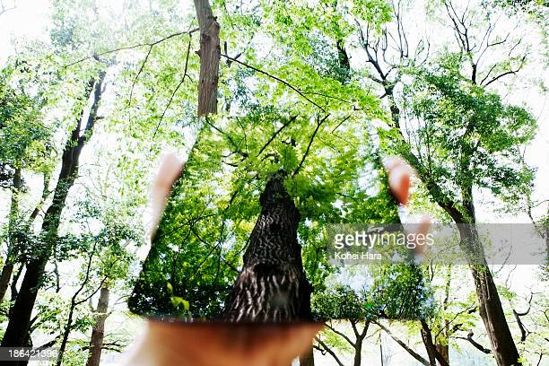 a man's hand holding a digital tablet in forest