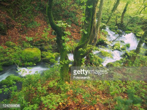 a Mountain Stream Surrounded By Trees, Bushes and Multicolored Leaves, High Angle View, Long Exposure, Akita Prefecture, Japan