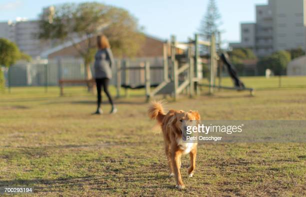 a Pregnant woman plays with her dog at the park.