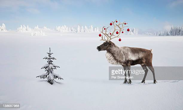 a reindeer with ornaments in his antlers by tree