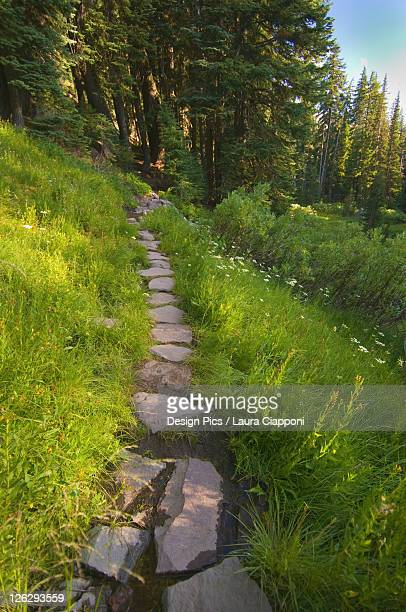 a rock trail through a meadow towards the trees at crater lake