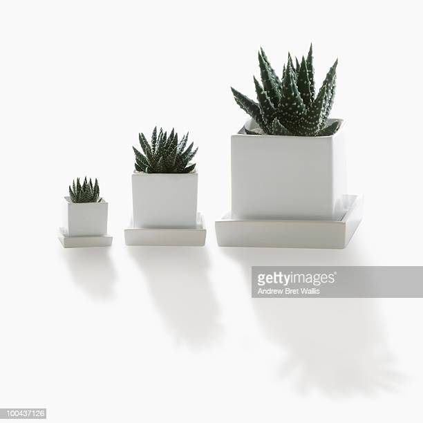 a small, medium and large pot plant in a row