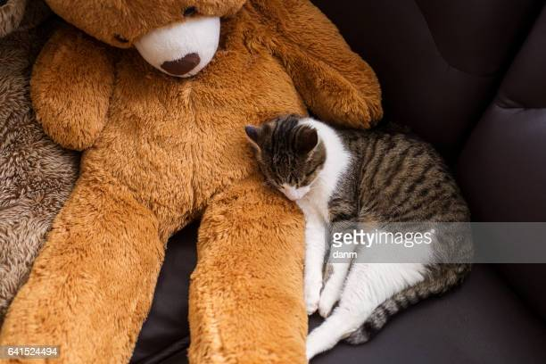 a sweet cat sleeping near a sleepy bear