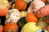 a stack  of a variety of pumpkins and winter squash from the pumpkin patch