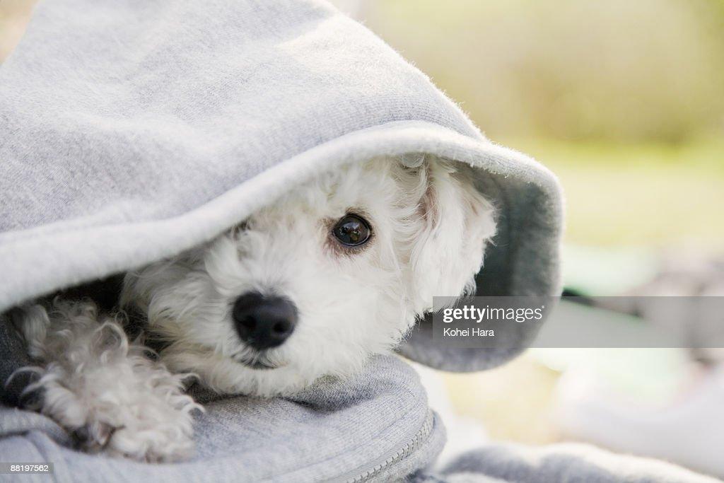 a white dog : Stock Photo