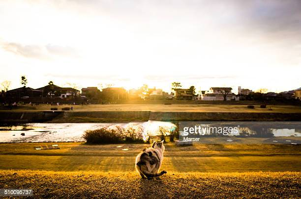 a wild calico cat at dusk
