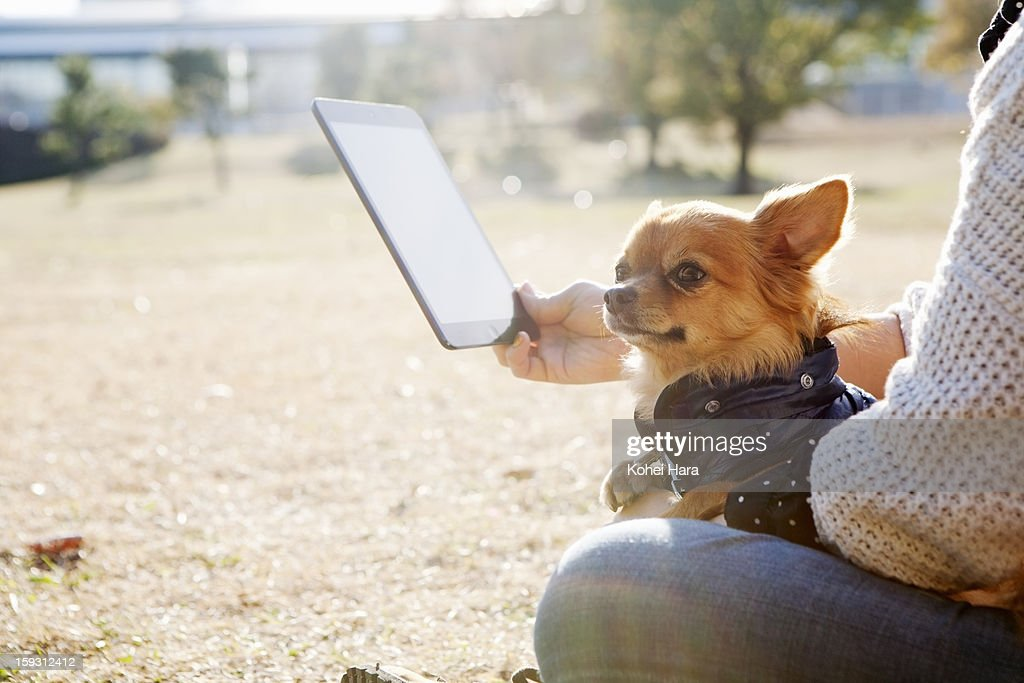 a woman using a digital tablet in the park : Stock Photo