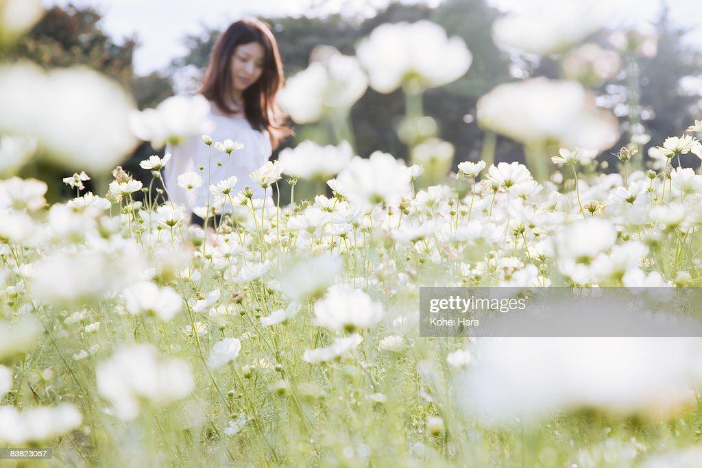 a woman walking on the flower field : Stock Photo