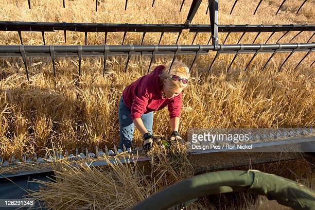 a woman works on a combine in a wheat field