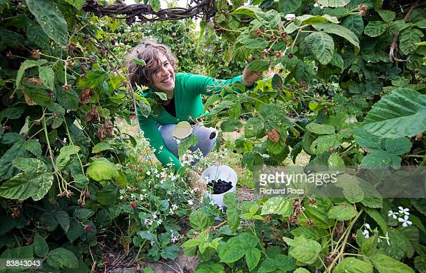 a young woman picking blackberries