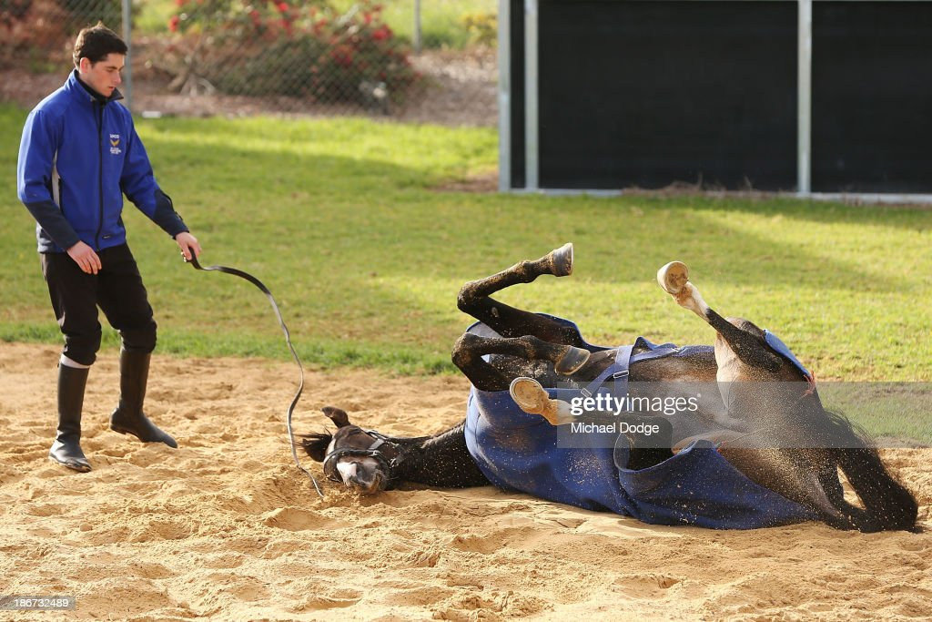 Aaron Madden lets Simonen roll in the sand during trackwork ahead of the Melbourne Cup at Werribee Racecourse on November 4, 2013 in Melbourne, Australia.