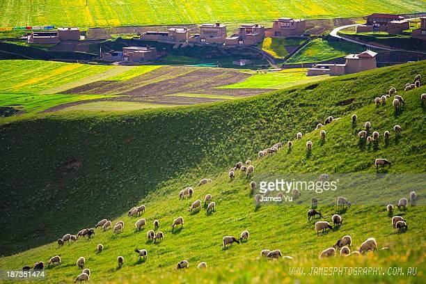 Aba Tibetan houses and farm