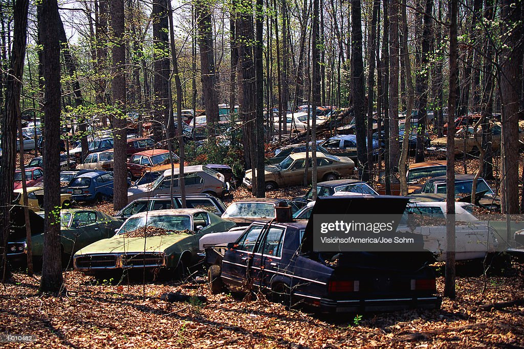 Abandoned cars in the woods : Stock Photo