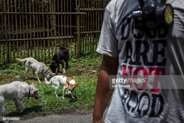 Abandoned dogs are feeding at North Duda village on October 3 2017 in Karangasem regency Island of Bali Indonesia Nearly 145000 Indonesian villagers...